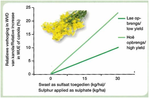 South African research confirms the increase of water use efficiency using the right source of sulphur on canola in the Western Cape (Ngezimana and Agenbag, 2015)