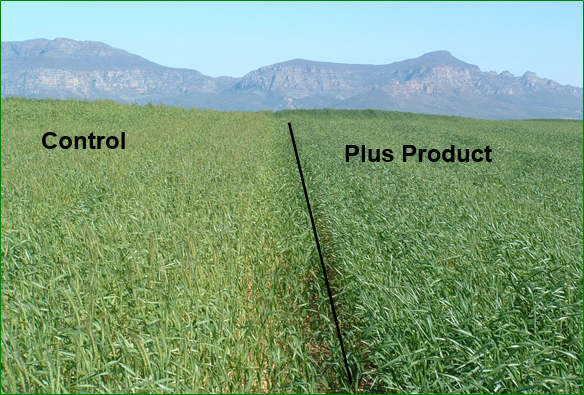 The performance of Plus Products in the Western Cape [photo]