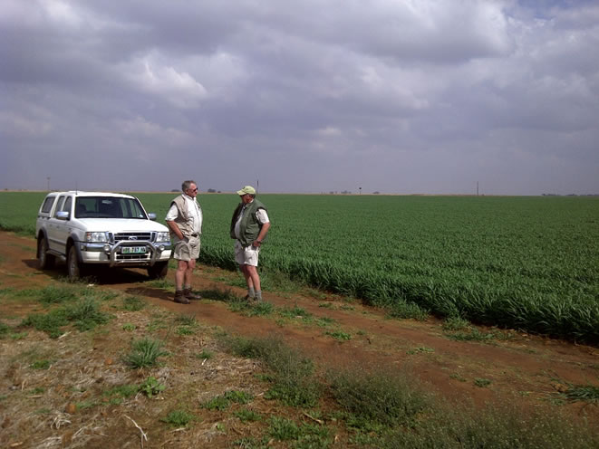 Photo 2: The agent, Hannes van Rensburg (left), and the farm foreman, Bokser (right) with the young wheat.
