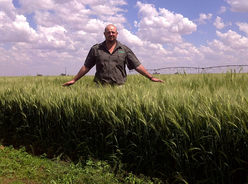Photo 4: Jannie Peyper (agronomist) shows how well the wheat responded.